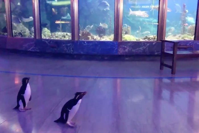 Penguin roaming zoo.