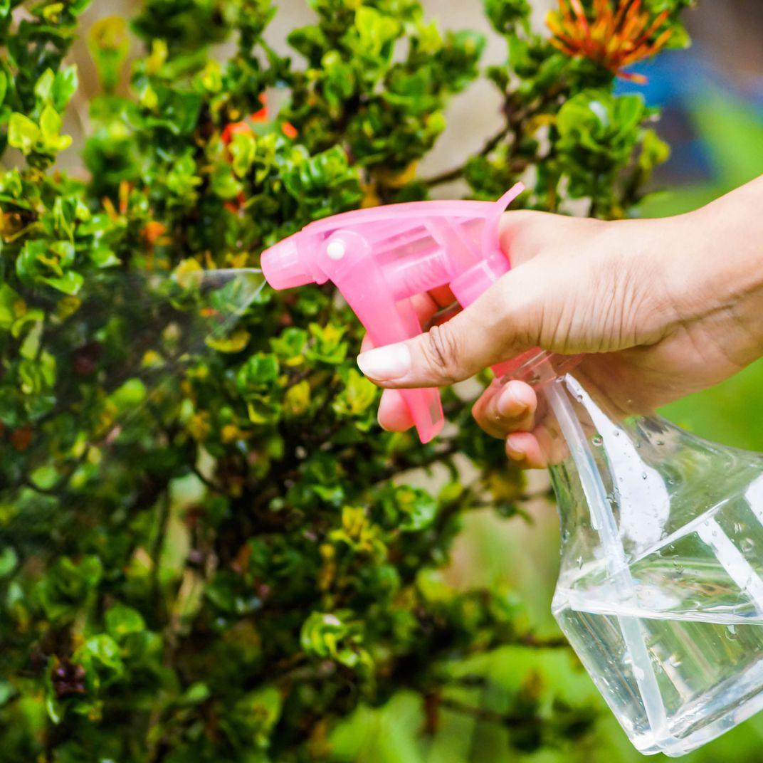 10 Best Fertilizers for Houseplants 2019