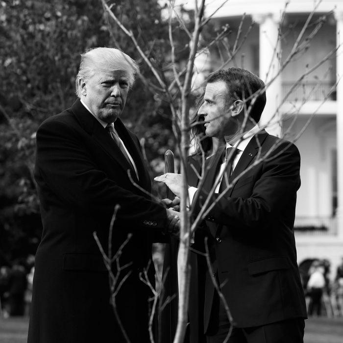 Donald Trump and Emmanuel Macron's tree.