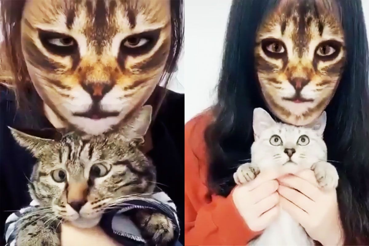 Cats Absolutely Hate When Their Humans Use Cat Face Filters