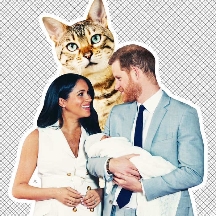 Did Meghan Markle And Prince Harry Name Archie After A Cat?