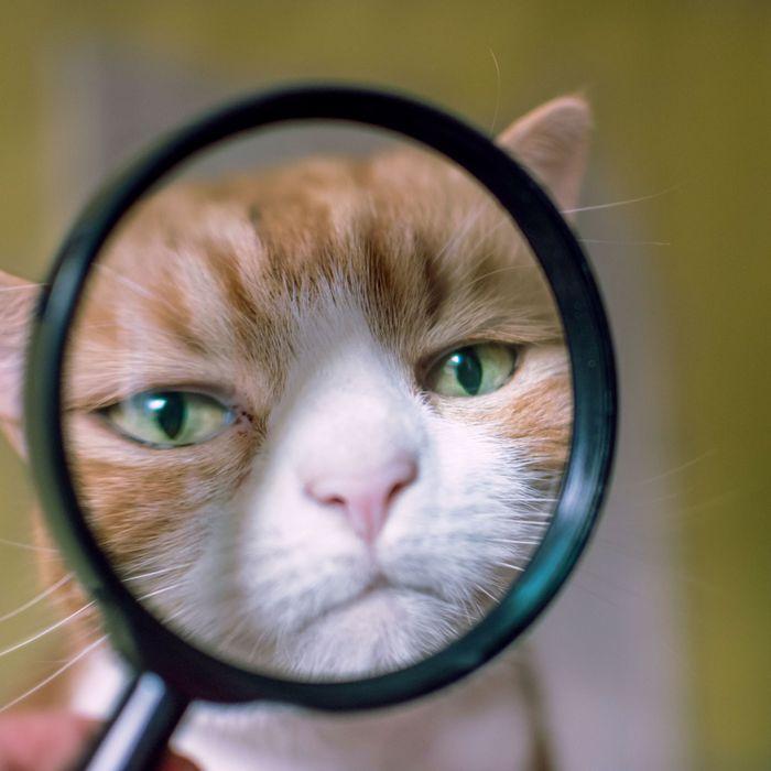 I see u