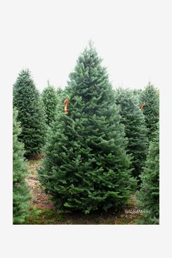 Premium Balsam-Fir Christmas Tree