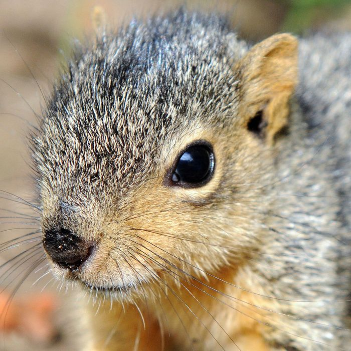 man calls police after savage attack by baby squirrel