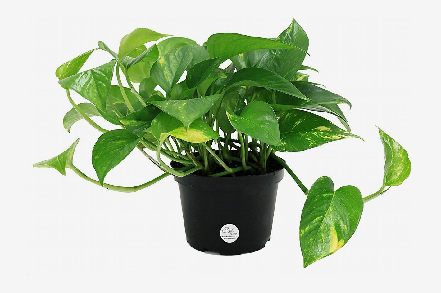 The 6 Best Plants for Cubicles, According to Plant Experts ... Hypoallergenic House Plants on non toxic house plants, allergy house plants, long lasting house plants, durable house plants,