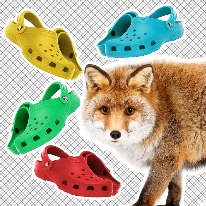 Let this fox keep his Crocs.