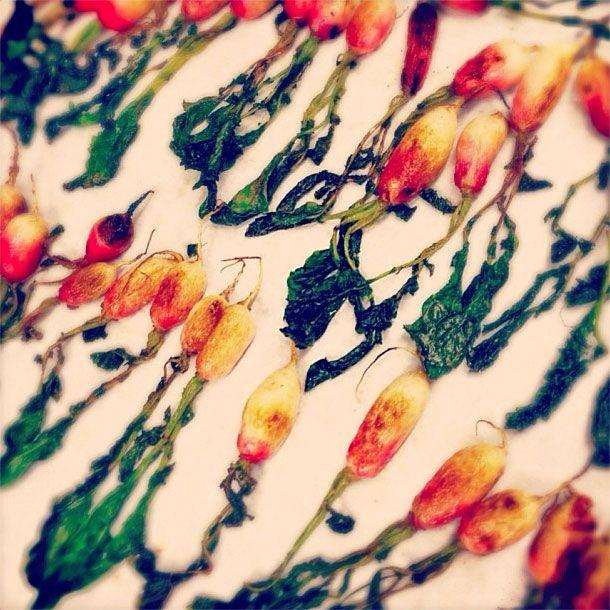 Beautiful radishes.