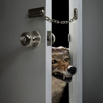 Wolf Growling with Head in Doorway