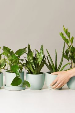 The Sill Plants for Beginners Monthly Subscription