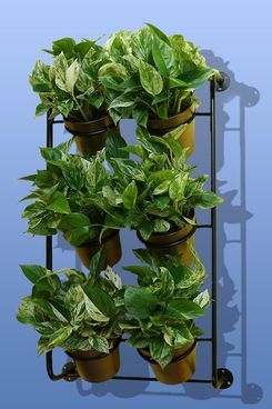 Ferry Morse Vertical Garden Kit
