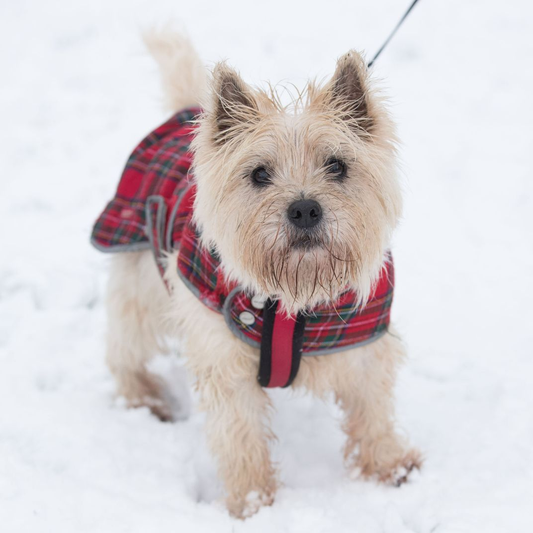 10 Best Dog Harnesses for Every Type of Dog 2019