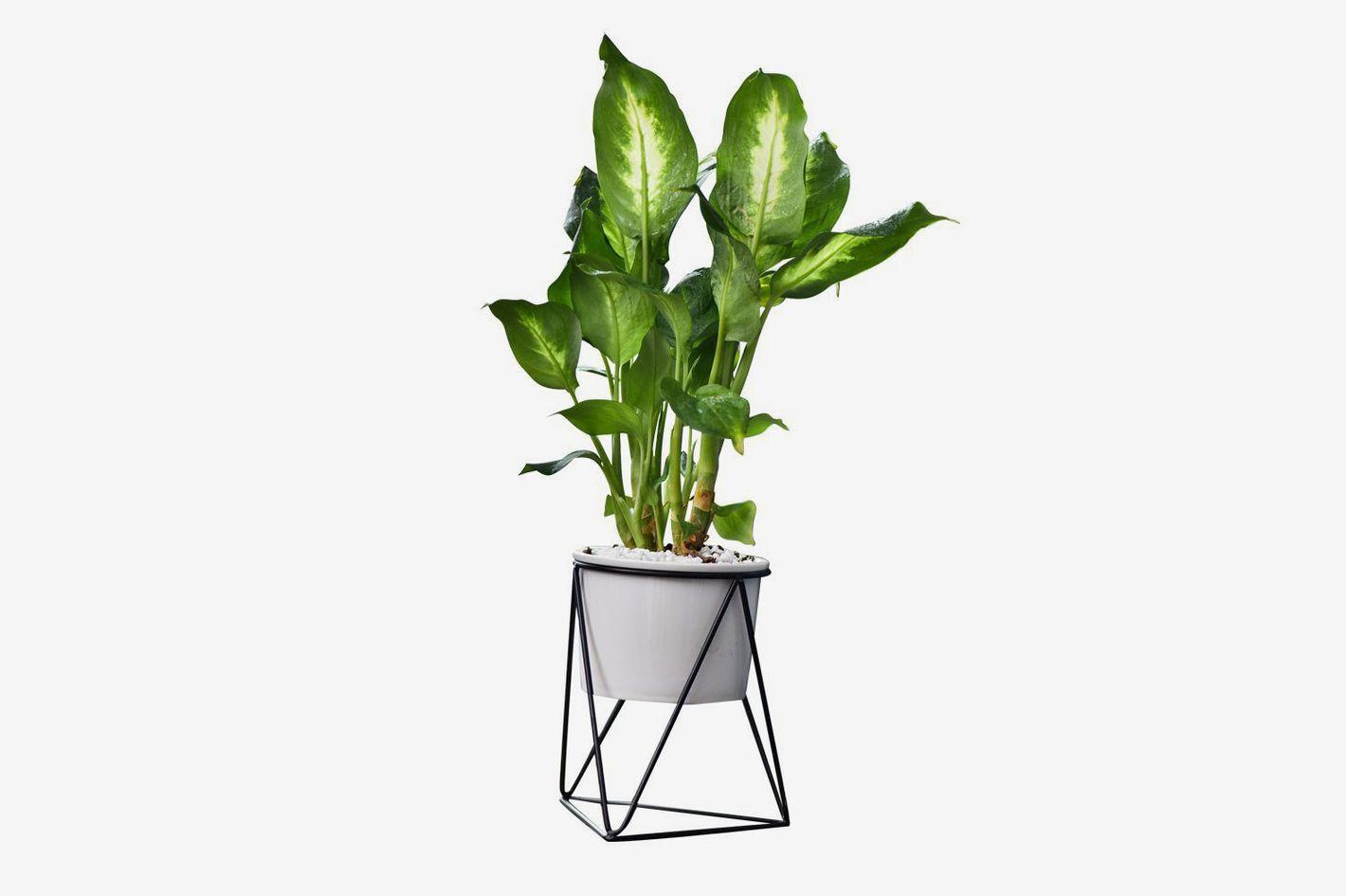 Feiren Outdoor-Indoor Planter