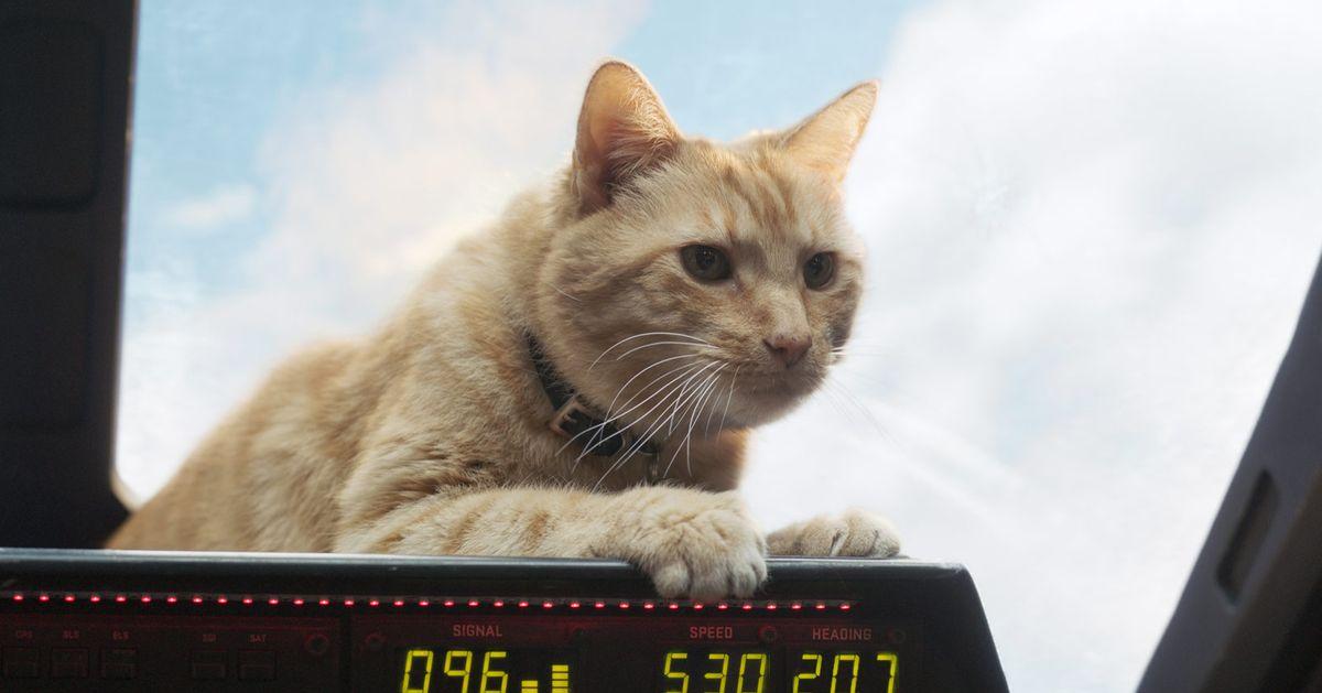 What Is A Flerken The Captain Marvel Cat Explained