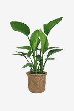 Allmodern Flowering Plant in Basket