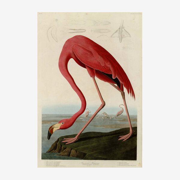 Berkin Arts John James Audubon Giclee American Flamingo Print