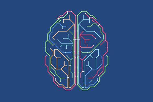 Brain, network diagram