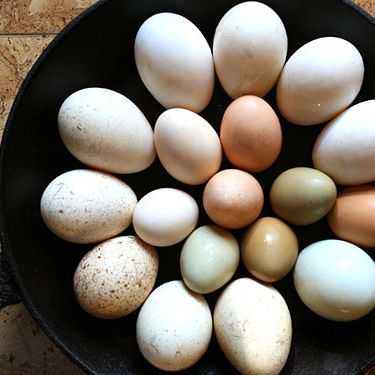 All eggs are not created equal.
