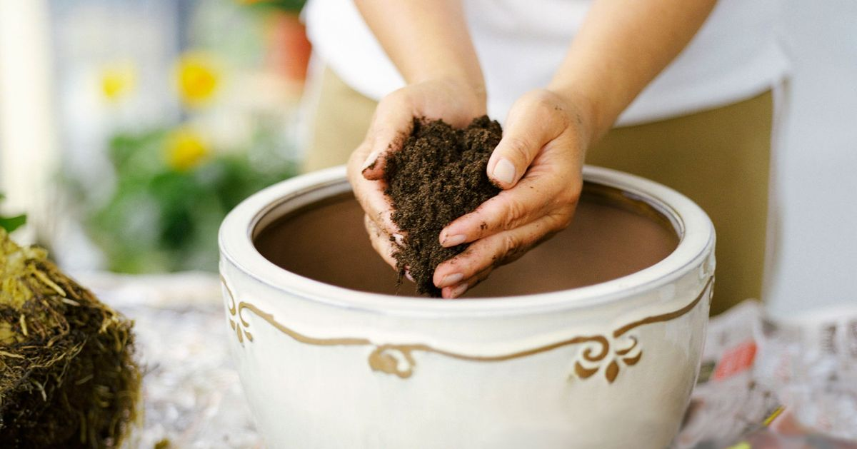 The Best Potting Soil for Every Type of Plant