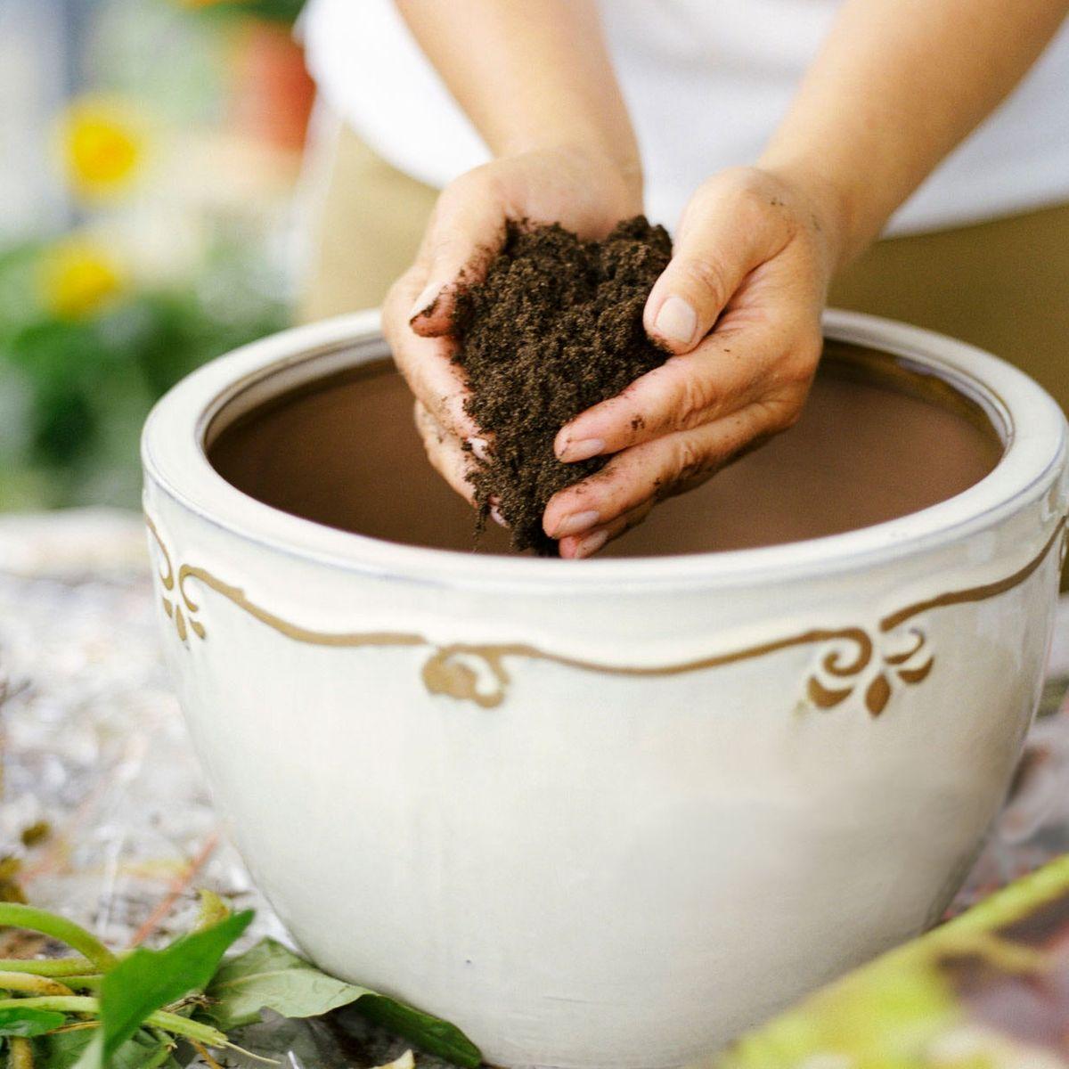 Best Potting Soil For Indoor Plants 2019 The Strategist New York Magazine