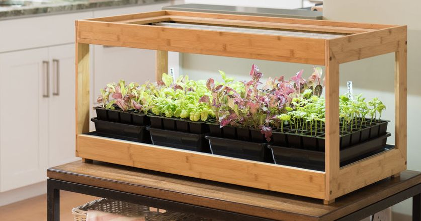 Everything You Need to Grow an Indoor Herb Garden