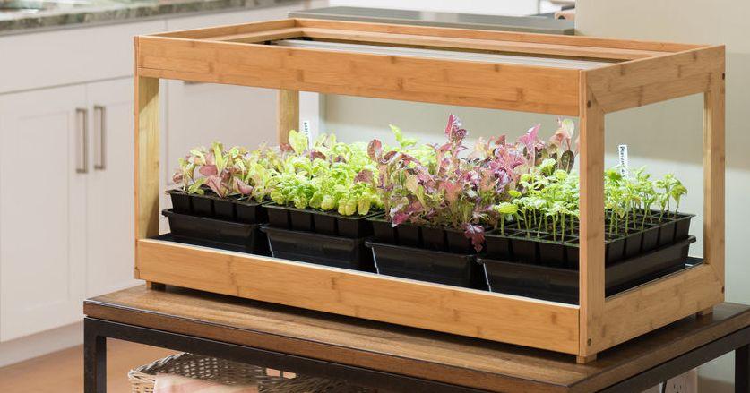 How to Grow an Indoor Herb Garden 2019 | The Strategist