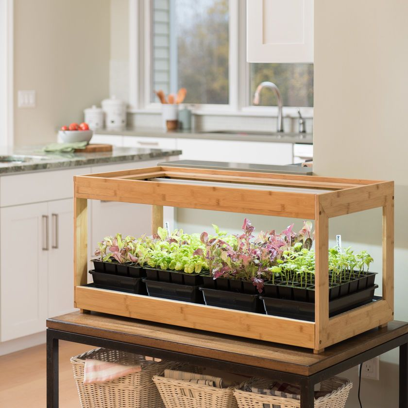 How To Grow An Indoor Herb Garden 2019 The Strategist New York Magazine