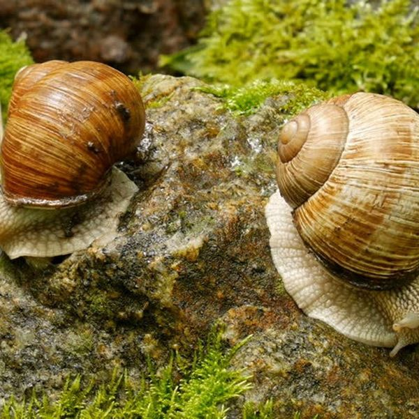 Wild Caught Wormer Snail Food - Protein Based Snail Food