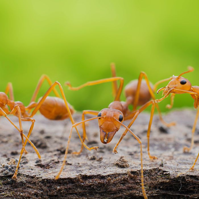 The Best Ant S On According To Hypehusiastic Reviewers