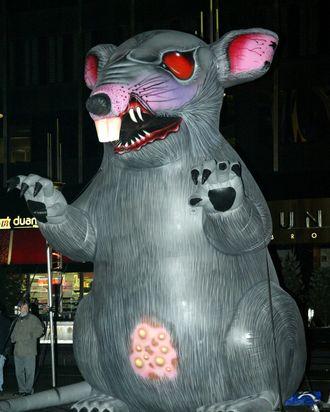 Scabbie the union rat.