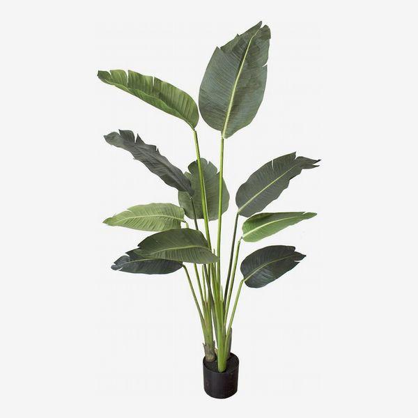 Arcadia Silk Plantation Bird of Paradise, 5-Feet Tall in Grow Pot