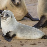 Best seal ever.
