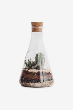 SUCK UK Chemistry Kit Plants & Cacti
