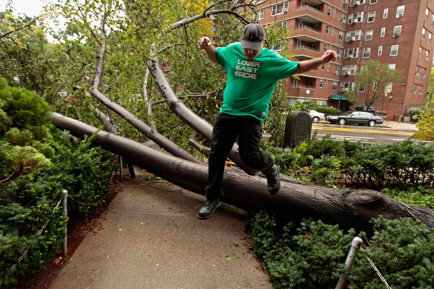 NEW YORK, NY - AUGUST 28:  Isaac Krinsky steps over one of five trees knocked over by high winds from Hurricane Irene in front of the East River Cooperative Village apartment buildings along Grand Avenue August 28, 2011 in New York City. The hurricane hit New York as a Category 1 storm before being downgraded to a tropical storm.  (Photo by Chip Somodevilla/Getty Images)