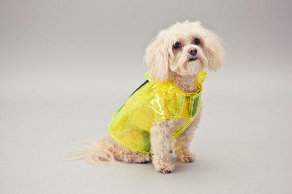 Acid Yellow Vinyl Raincoat