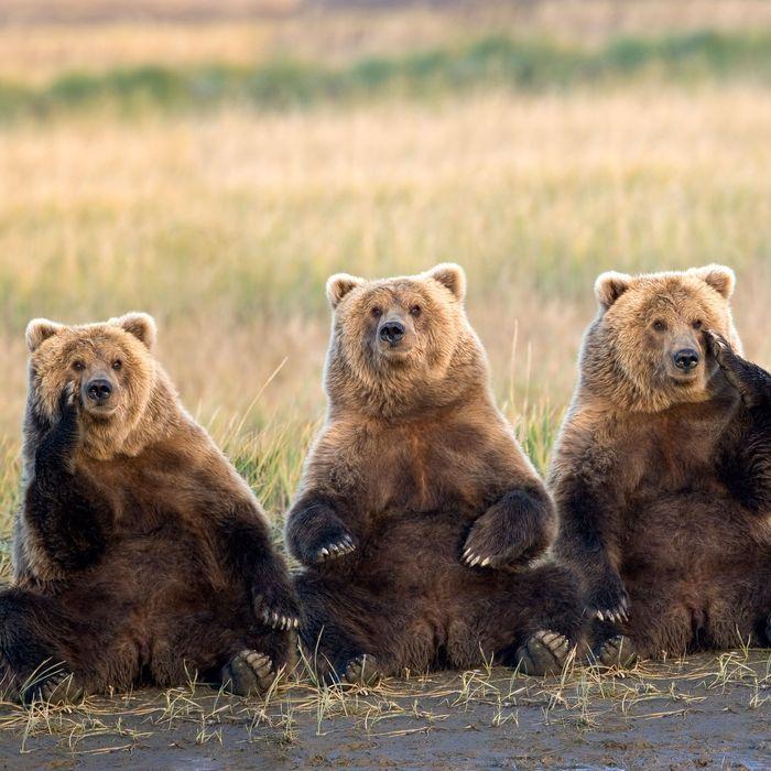 Three fat bears.