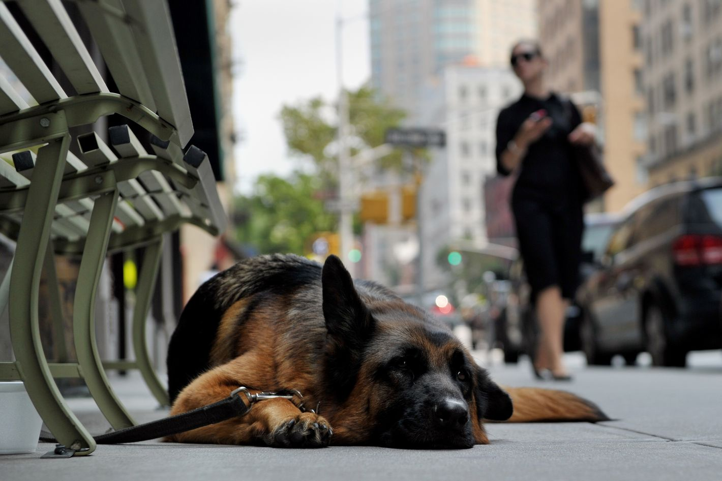 A dog lies on the sidewalk by a shop on Madison Avenue on July 19, 2013 in New York as a heatwave continues in the northeast.    AFP PHOTO/Stan HONDA        (Photo credit should read STAN HONDA/AFP/Getty Images)