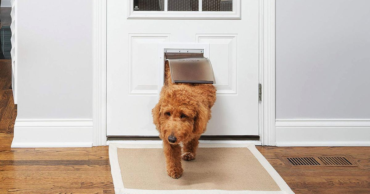 9 Best Dog Doors 2019 The Strategist New York Magazine