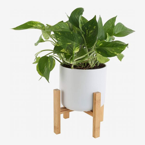 Costa Farms Golden Pothos in raised white pot with light brown wooden legs. The Strategist - Amazon Has Practically an Entire Plant Nursery on Sale Right Now