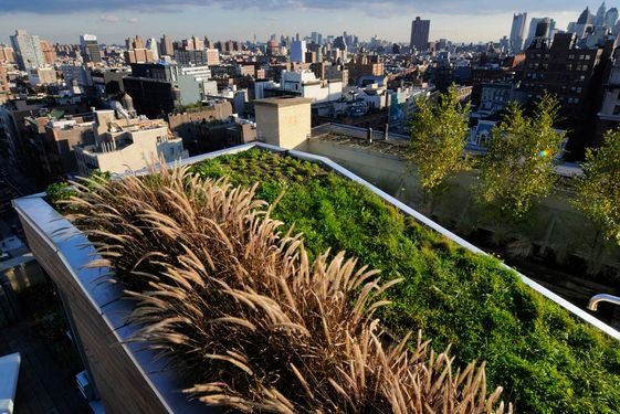 Going Green in the Urban Jungle
