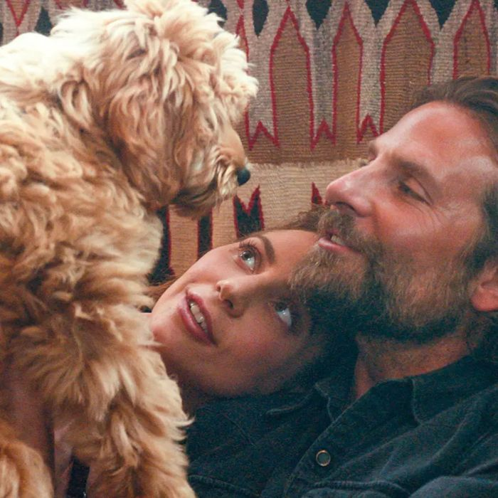 bradley cooper cast his own sweet dog in a star is born