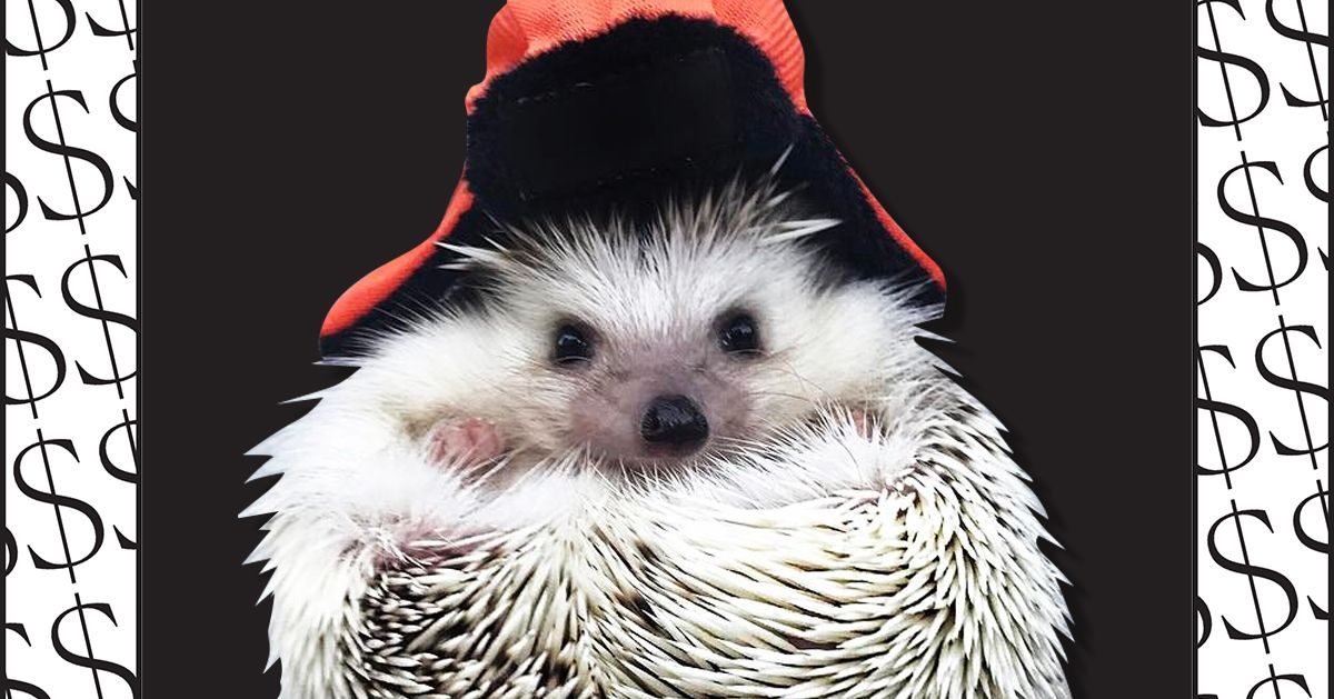 'My Pet Hedgehog Is an Instagram Influencer'
