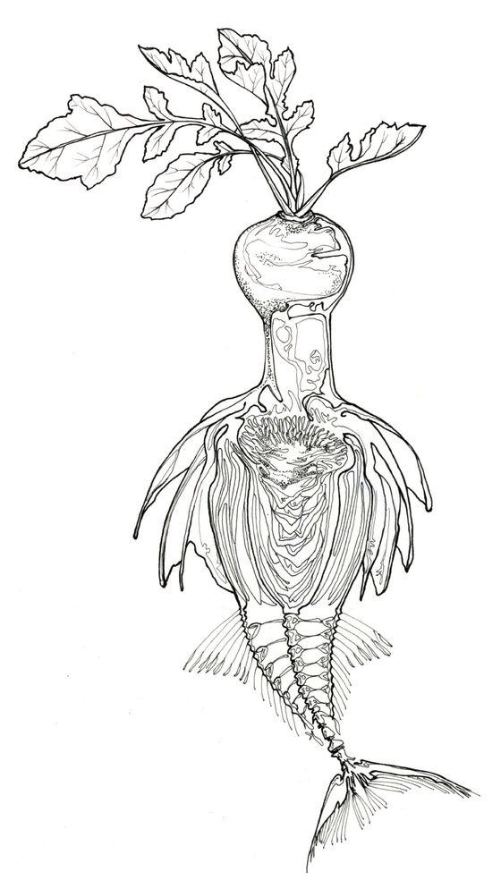 Composite exquisite corpse of fish bones, artichoke, and radish.