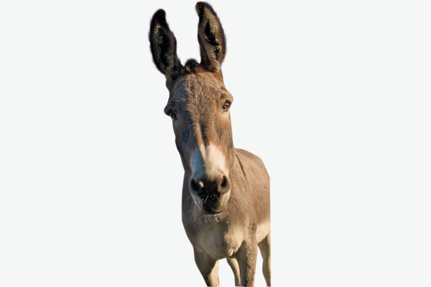 Rescue Donkey