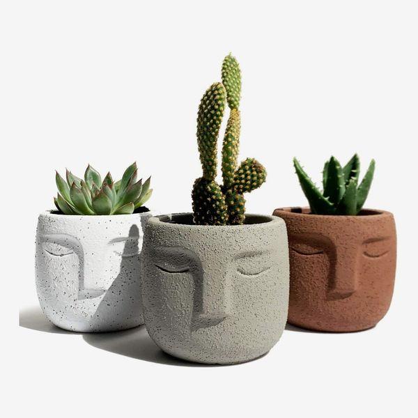 Gepege Indoor Succulent Plants Pot 3 Inch Set of 3