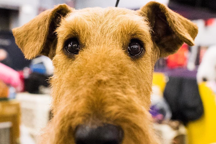 Up close — really close. The Dogist/Instagram