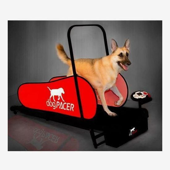 DogPacer LF 3.1 Dog Treadmill