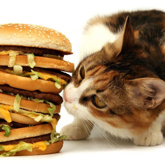 Celluose-sniffing cat is unamused.