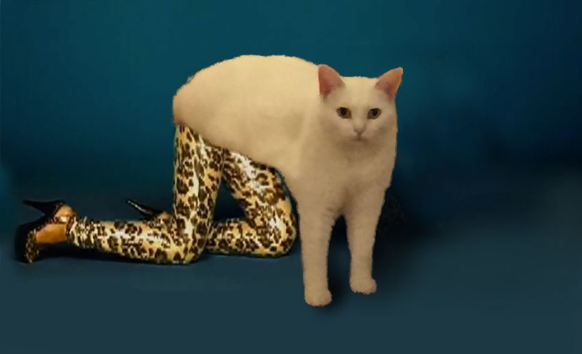 Hilarious Photoshopped Pictures Of Two Legged Cat