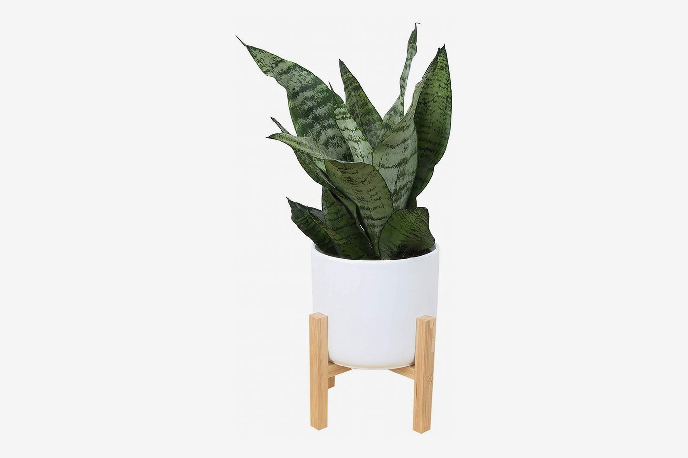 Costa Farms Snake Plant with 6.5-Inch Wide Mid-Century Modern Planter