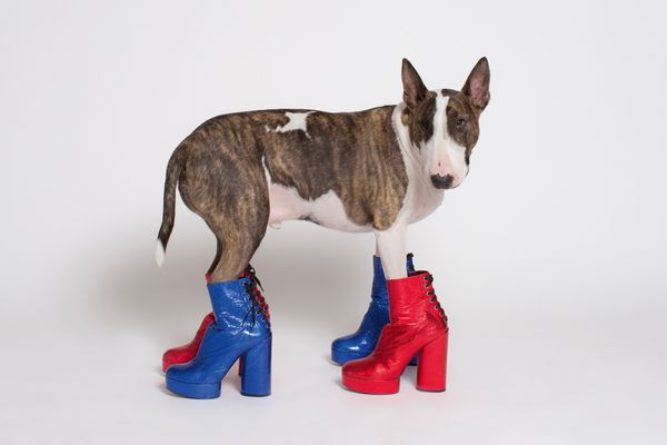 Marc Jacobs's Dog Has His Own Coffee-Table Book